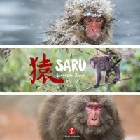 Saru, singes du Japon