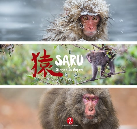 Saru, singes du Japon