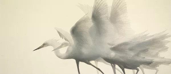 Éphémère immortel par Mikio Watanabe